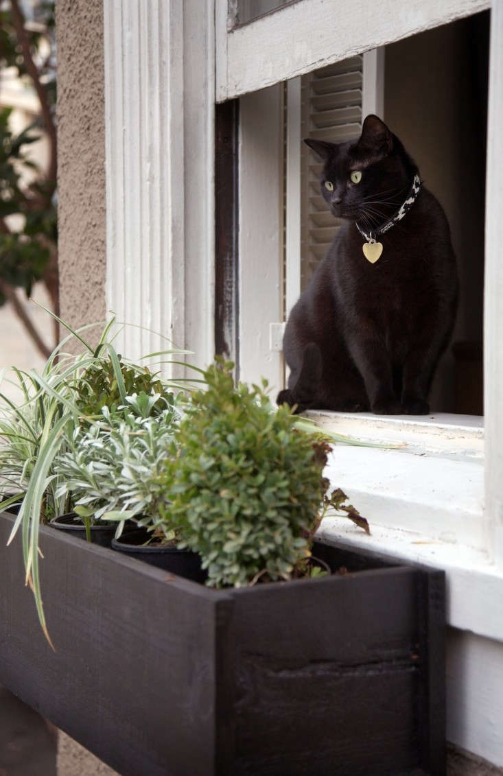 Black%20Window%20Boxes%20with%20Black%20Cat%2C%20Gardenista