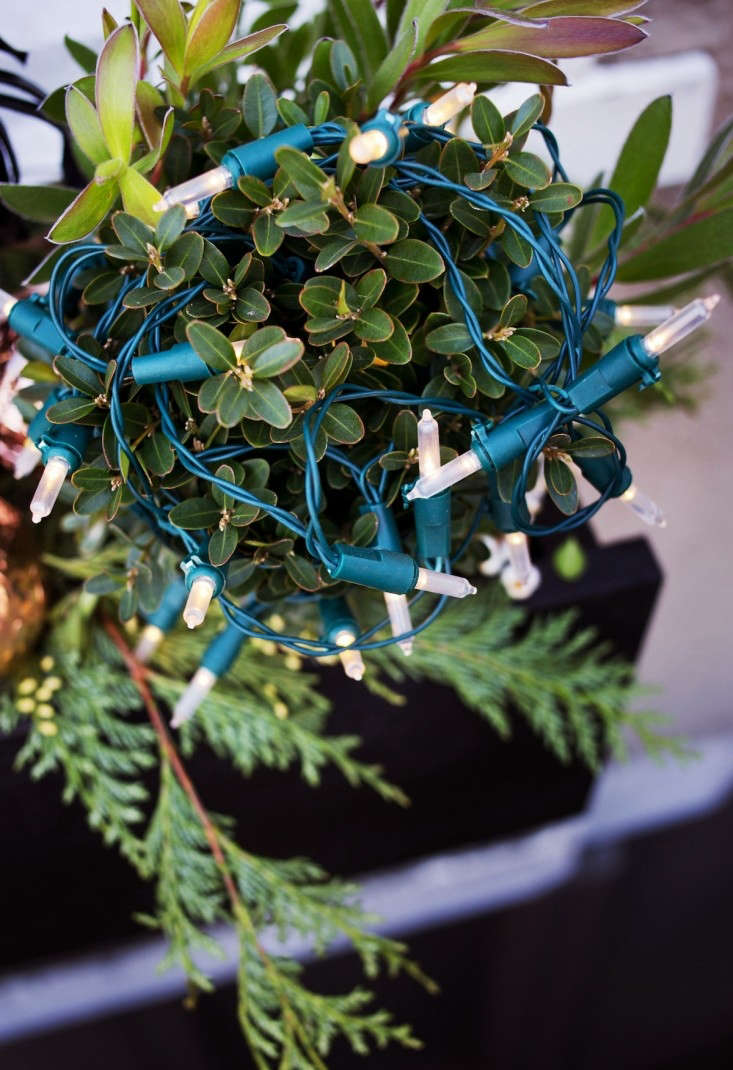 Boxwood%20Decorated%20with%20White%20Christmas%20Lights%2C%20Gardenista