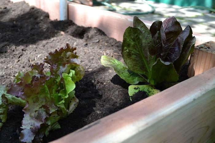 Kitchen-garden-Stacey-Lindsay