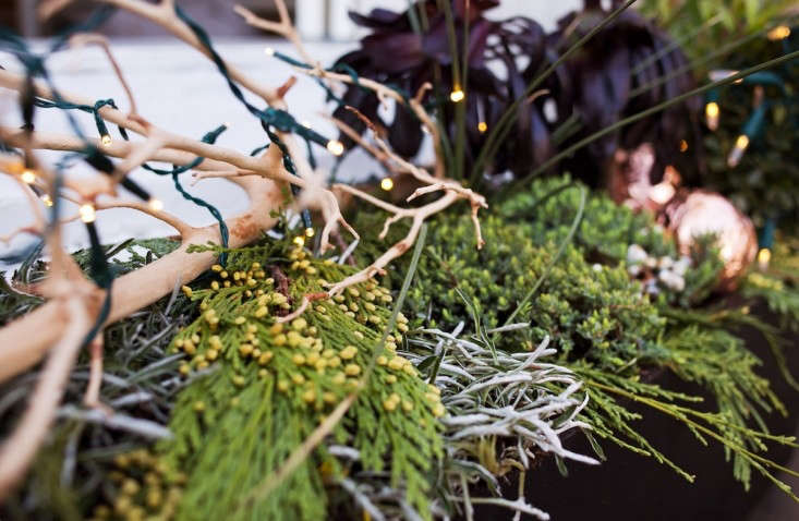 Window%20Boxes%20Decorated%20for%20Holidays%20with%20Lights%20and%20Cedar%20and%20Succulents%2C%20Gardenista