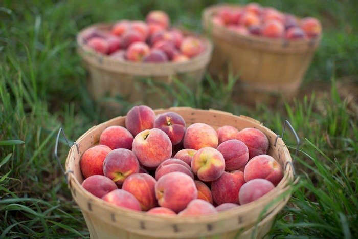 buckets-of-peaches-one