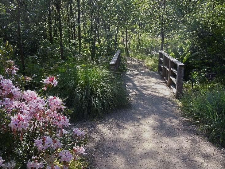 california%20natives%20rhododendron%20sf%20botanical%20garden_0