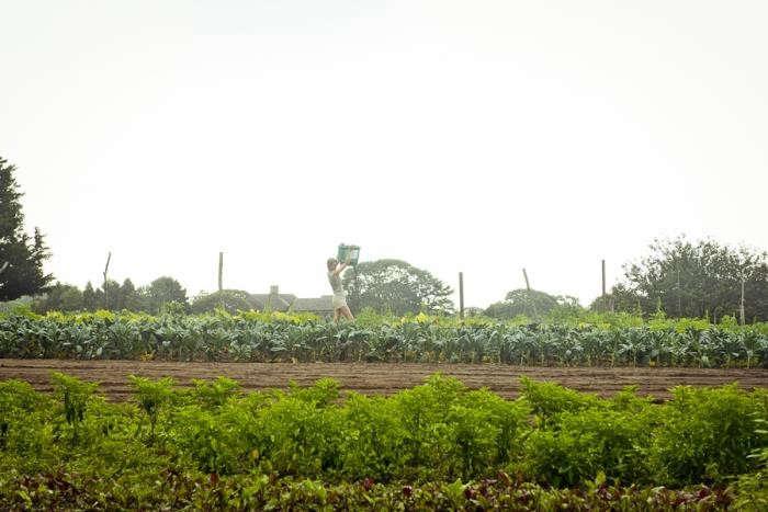 700_beetlebung-farm-greenery