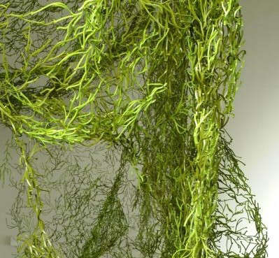 algues-green-unica-home