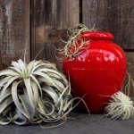flora-grubb-red-pot