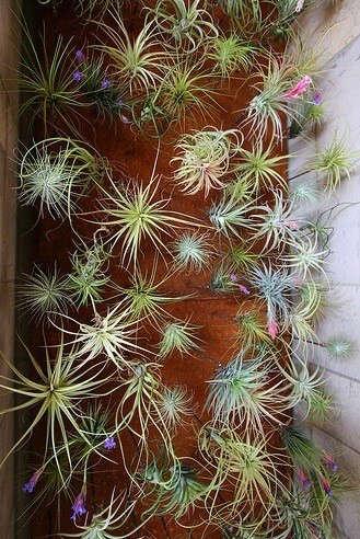 flora-grubb-tilandsia