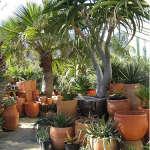 flora-grubb-trees