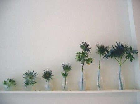 m-co-spiny-vases