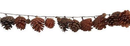 pineconestrandwisteria