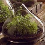 roost-terrarium