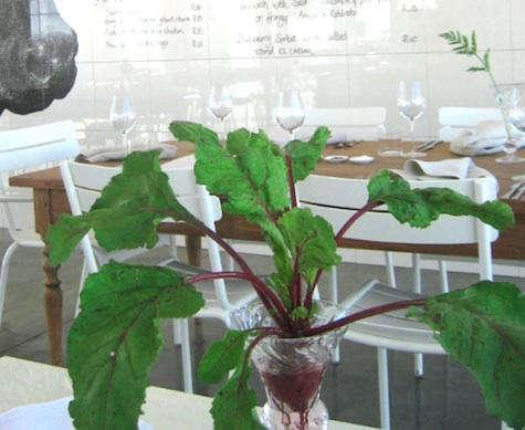 babel-beet-as-decor