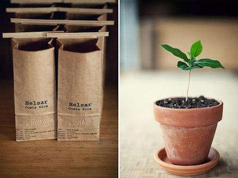 coava-bag-plant