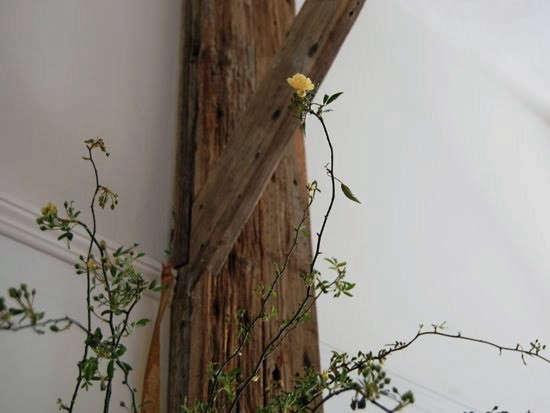 yellow-wild-rose-vines