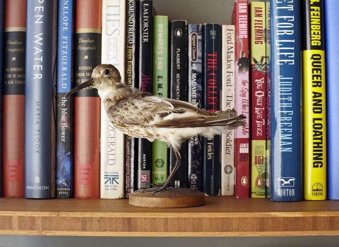 700_michael-cunningham-bookshelf-bird