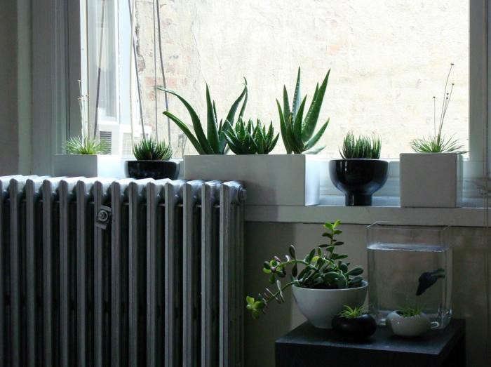 700_mikado-house-plant-in-window-sill