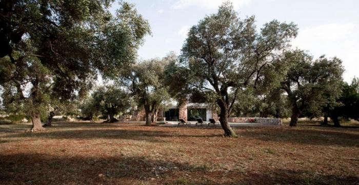 700_olive-grove-modern-house-in-italy