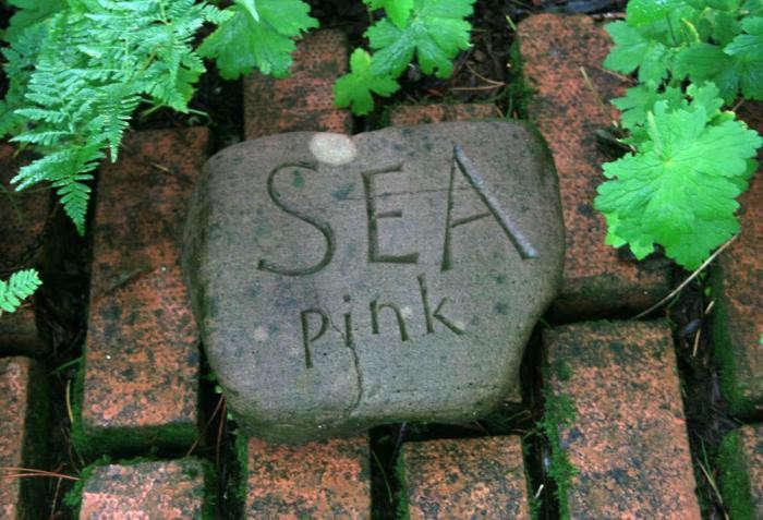700_sea-pink