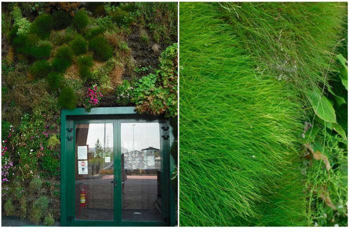 700_world-s-1-biggest-vertical-garden-millan