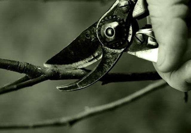 640_pruning-chrispriestley