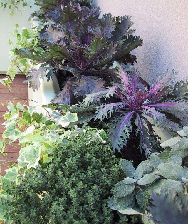 640_upload-vb-terrace-plant-detail