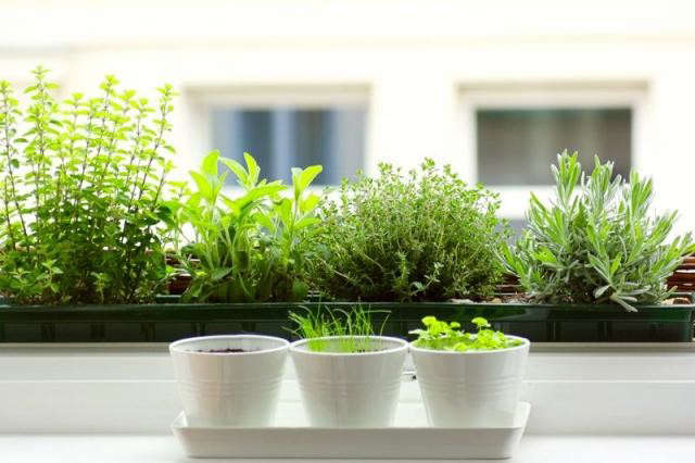 5 quick fixes herbs for the kitchen windowsill remodelista Kitchen windowsill herb pots