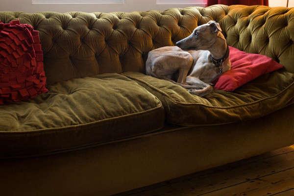 russells-weird-dog