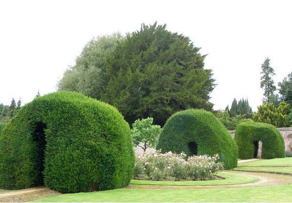 yew-hedge-gardenvisit-com