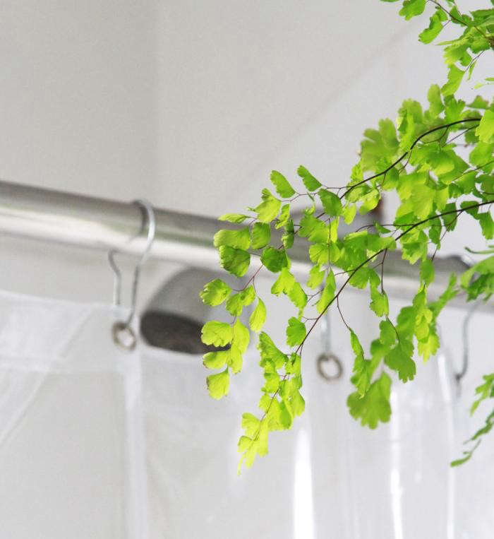 700_button-fern-and-shower-head