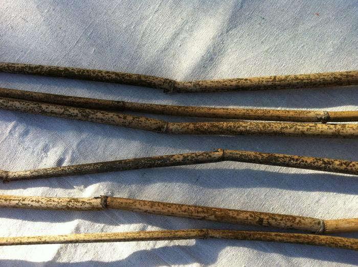 700_fennel-harvesting-4
