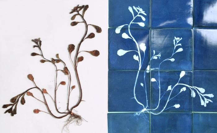 700_glithero-blueware-tiles-06-jpeg
