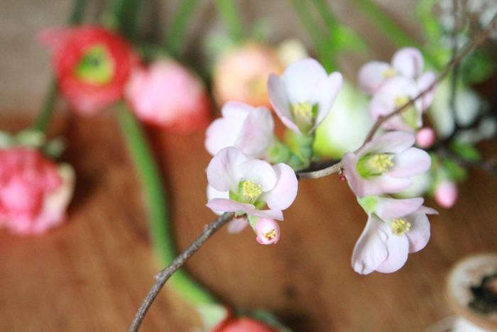 700_quince-blossoms-erin-boyle