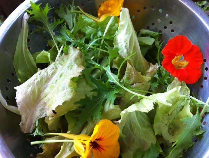 gutter-garden-salad-10