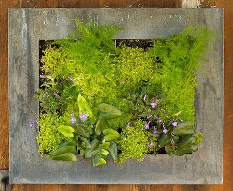terrain-picture-garden-planted