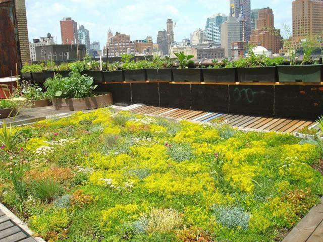 640_green-roof-garden-1