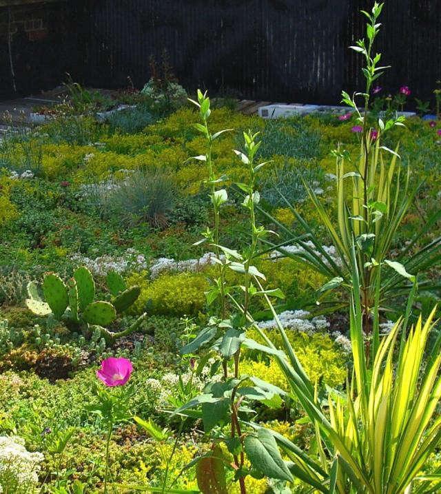 640_green-roof-garden-2