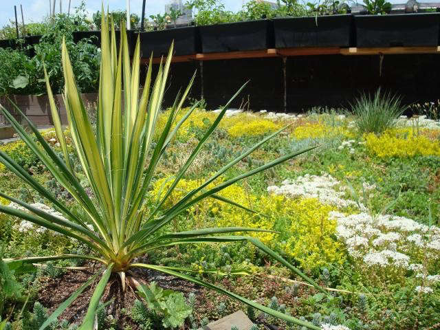 640_green-roof-garden-3