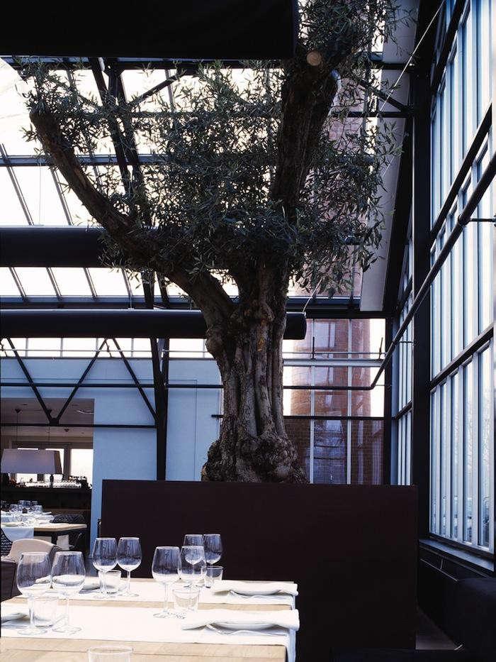 700_1de-kas-interior-tree