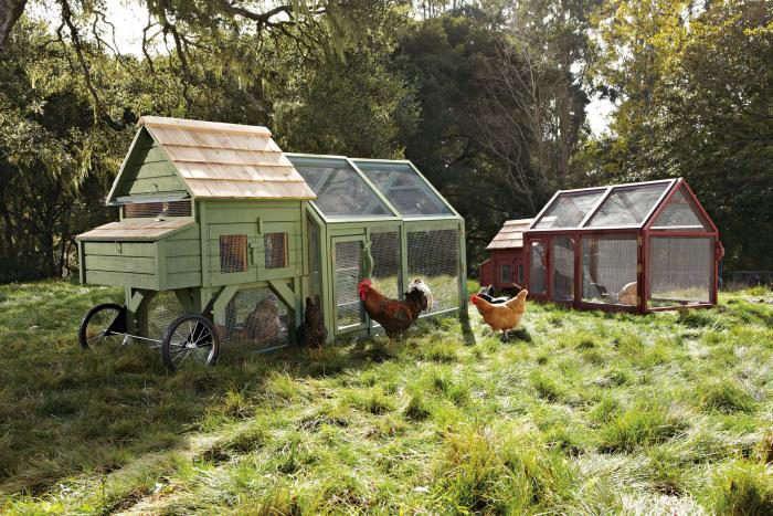 700_chicken-coop-agrarian