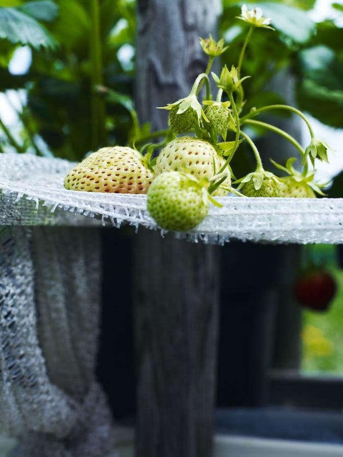 700_de-kas-green-strawberry