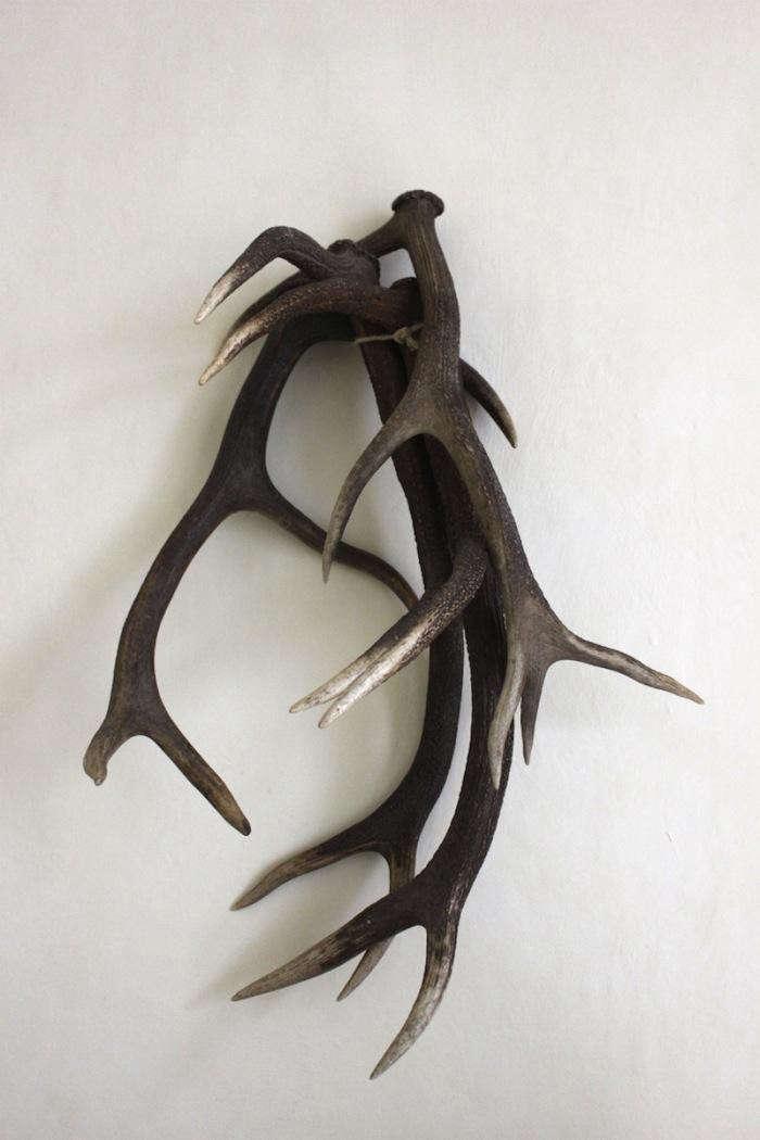 700_elkhorn-antlers