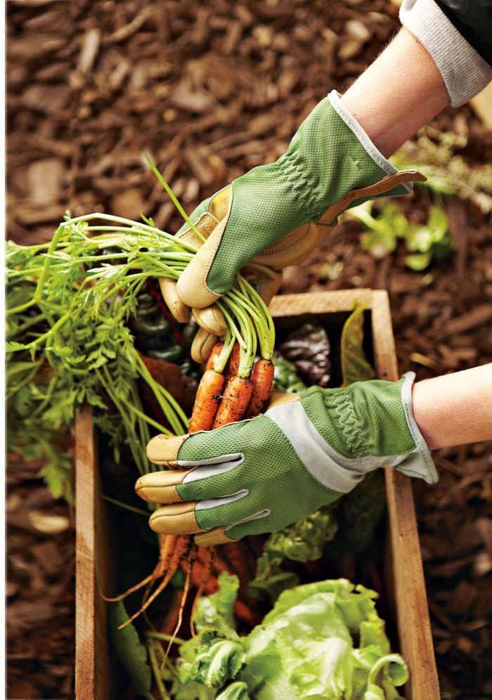 700_garden-gloves-carrots
