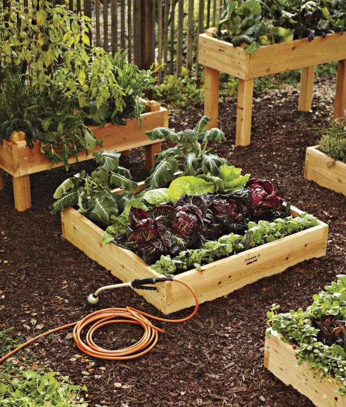 700_raised-beds-cropped
