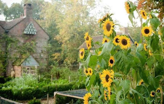 700_walnuts-farm-dovecote-sunflowers