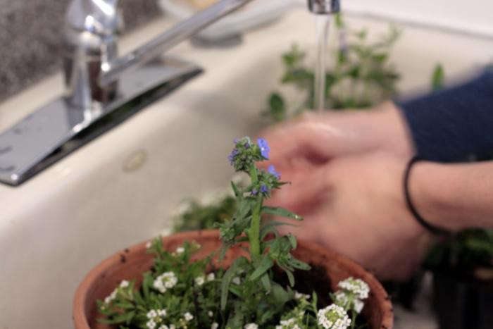 700_-forget-me-not-in-sink