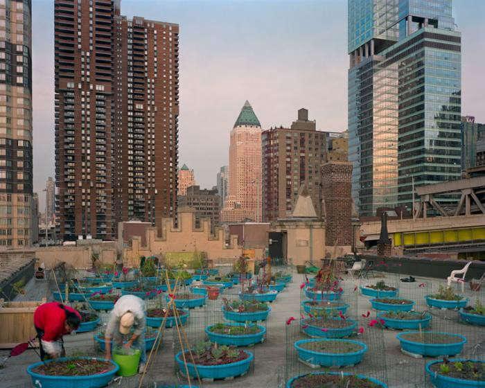 700_hells-kitchen-rooftop-farm-rob-stephenson