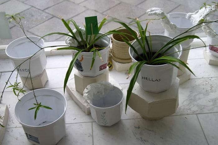 700_house-plants-gardenista-installation-project