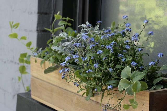 erin-boyle-urban-garden-box