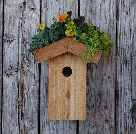 TerrainS_birdhouseBEST