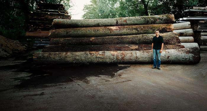 700_8-oak-trees-wiedemann