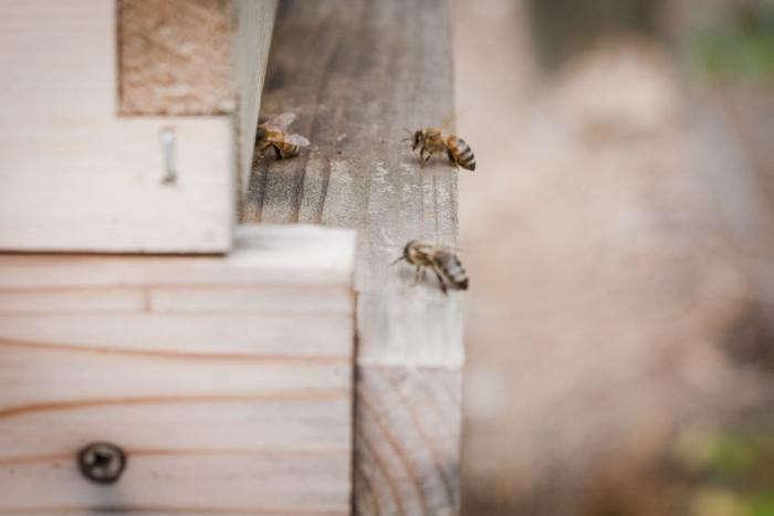 700_backyard-beekeeping-bees-number-one